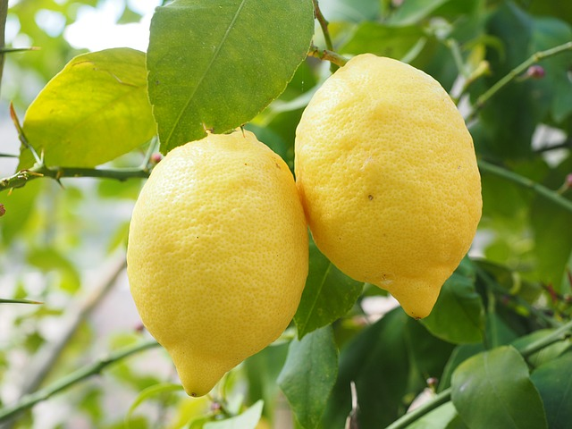 Blogimg - The Master Cleanse_640
